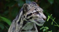 leopard wild 1542237651 200x110 - Leopard Wild - leopard wallpapers, animals wallpapers