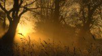 light sun ears outlines trees glow 4k 1541117606 200x110 - light, sun, ears, outlines, trees, glow 4k - Sun, Light, ears