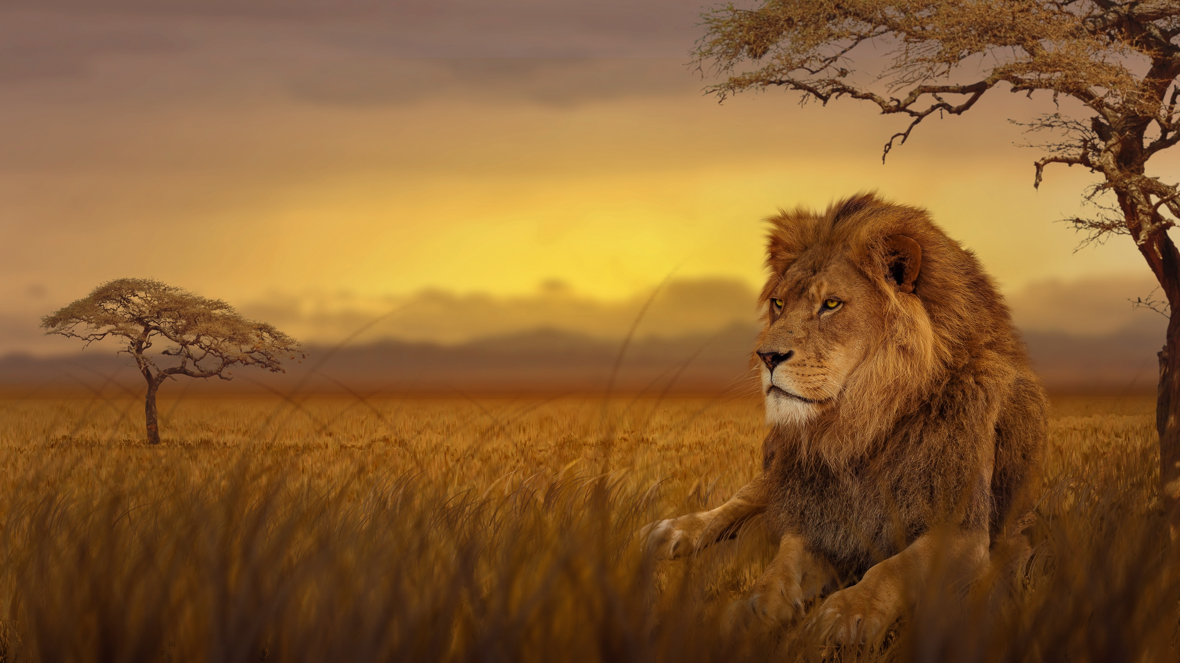 lion forest 4k 1542239116 - Lion Forest 4k - lion wallpapers, hd-wallpapers, forest wallpapers, animals wallpapers, 4k-wallpapers