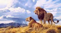 lion lioness artwork 4k 1542238780 200x110 - Lion Lioness Artwork 4k - lion wallpapers, hd-wallpapers, artwork wallpapers, animals wallpapers, 4k-wallpapers