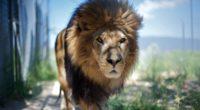 lion mane predator face 4k 1542241757 200x110 - lion, mane, predator, face 4k - Predator, mane, Lion