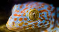 lizard eye macro 4k 1542239630 200x110 - Lizard Eye Macro 4k - reptile wallpapers, macro wallpapershd wallpapers, macro wallpapers, lizard wallpapers, animals wallpapers, 4k-wallpapers
