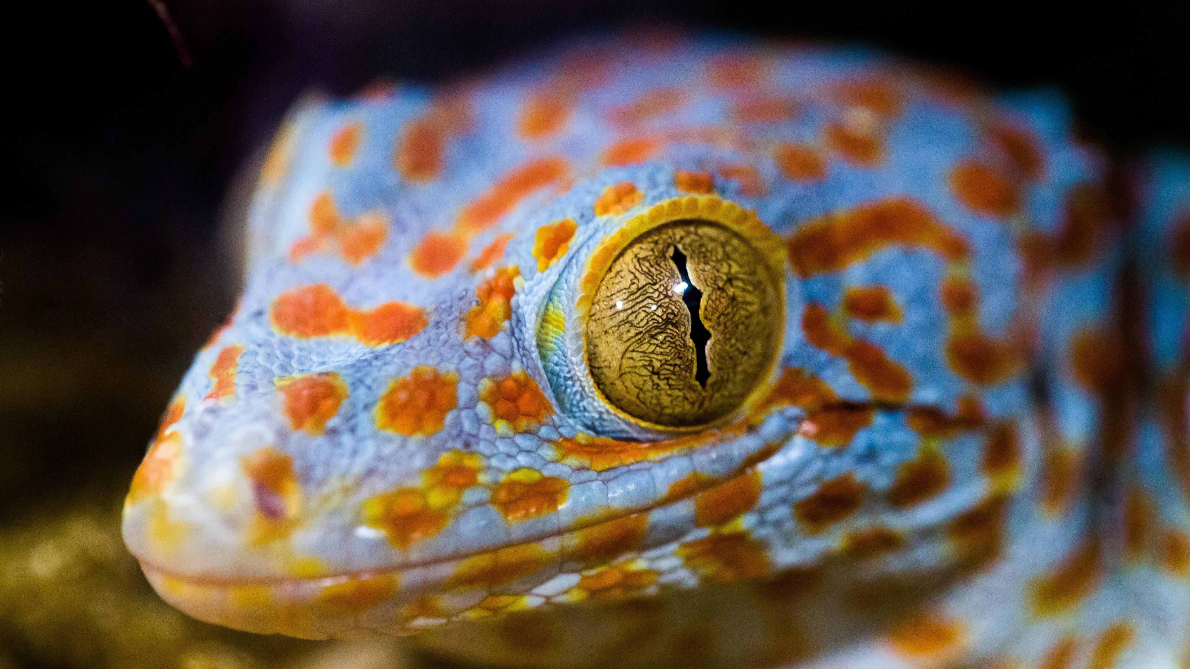 lizard eye macro 4k 1542239630 - Lizard Eye Macro 4k - reptile wallpapers, macro wallpapershd wallpapers, macro wallpapers, lizard wallpapers, animals wallpapers, 4k-wallpapers