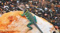 lizard gecko stones 4k 1542242742 200x110 - lizard, gecko, stones 4k - Stones, Lizard, gecko