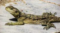 lizard reptile cyprus 4k 1542242921 200x110 - lizard, reptile, cyprus 4k - reptile, Lizard, cyprus
