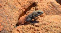 lizard reptile stone crawling 4k 1542242931 200x110 - lizard, reptile, stone, crawling 4k - stone, reptile, Lizard