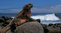 lizard rock sea 4k 1542242898 200x110 - lizard, rock, sea 4k - Sea, Rock, Lizard