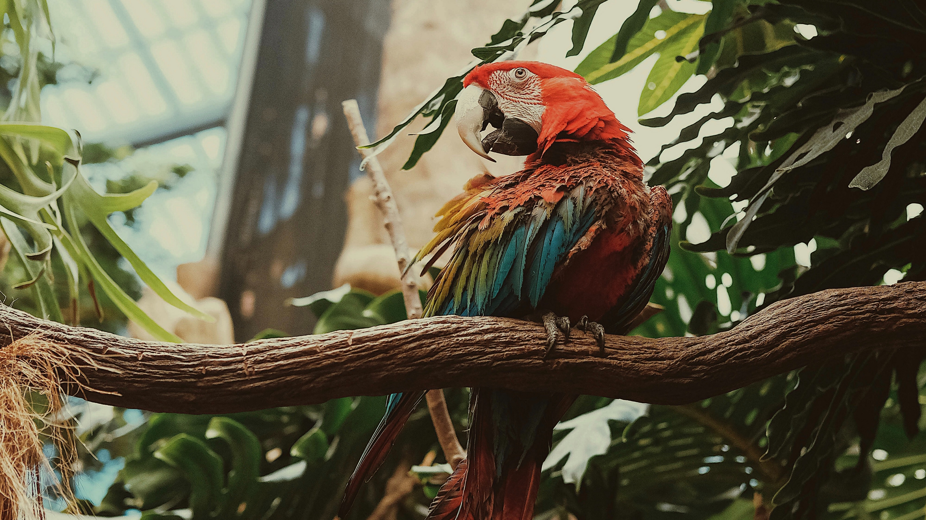 macaw parrot bird colorful 4k 1542241448 - macaw, parrot, bird, colorful 4k - Parrot, Macaw, Bird