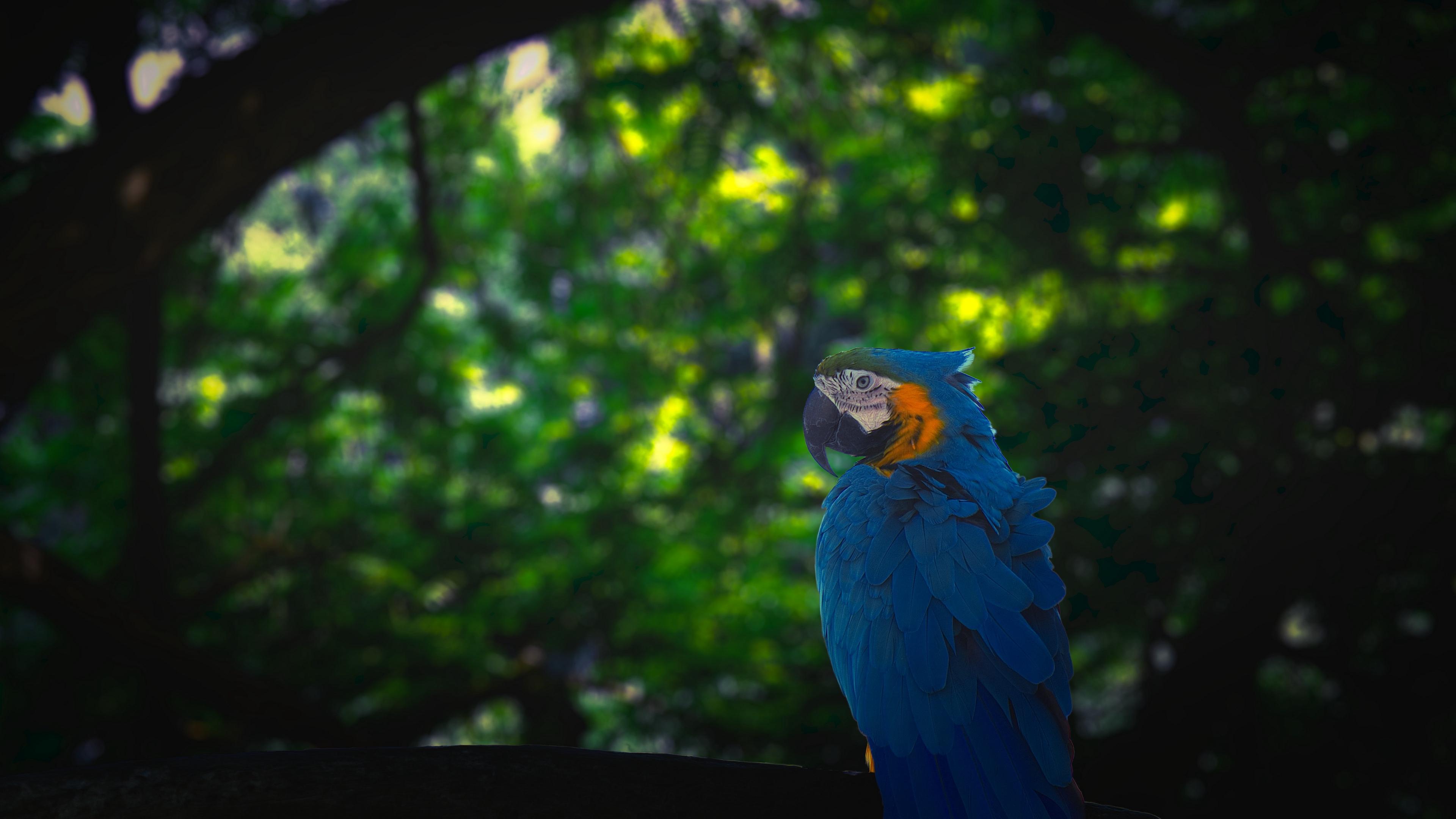 macaw parrot bird jungle 4k 1542242809 - macaw, parrot, bird, jungle 4k - Parrot, Macaw, Bird