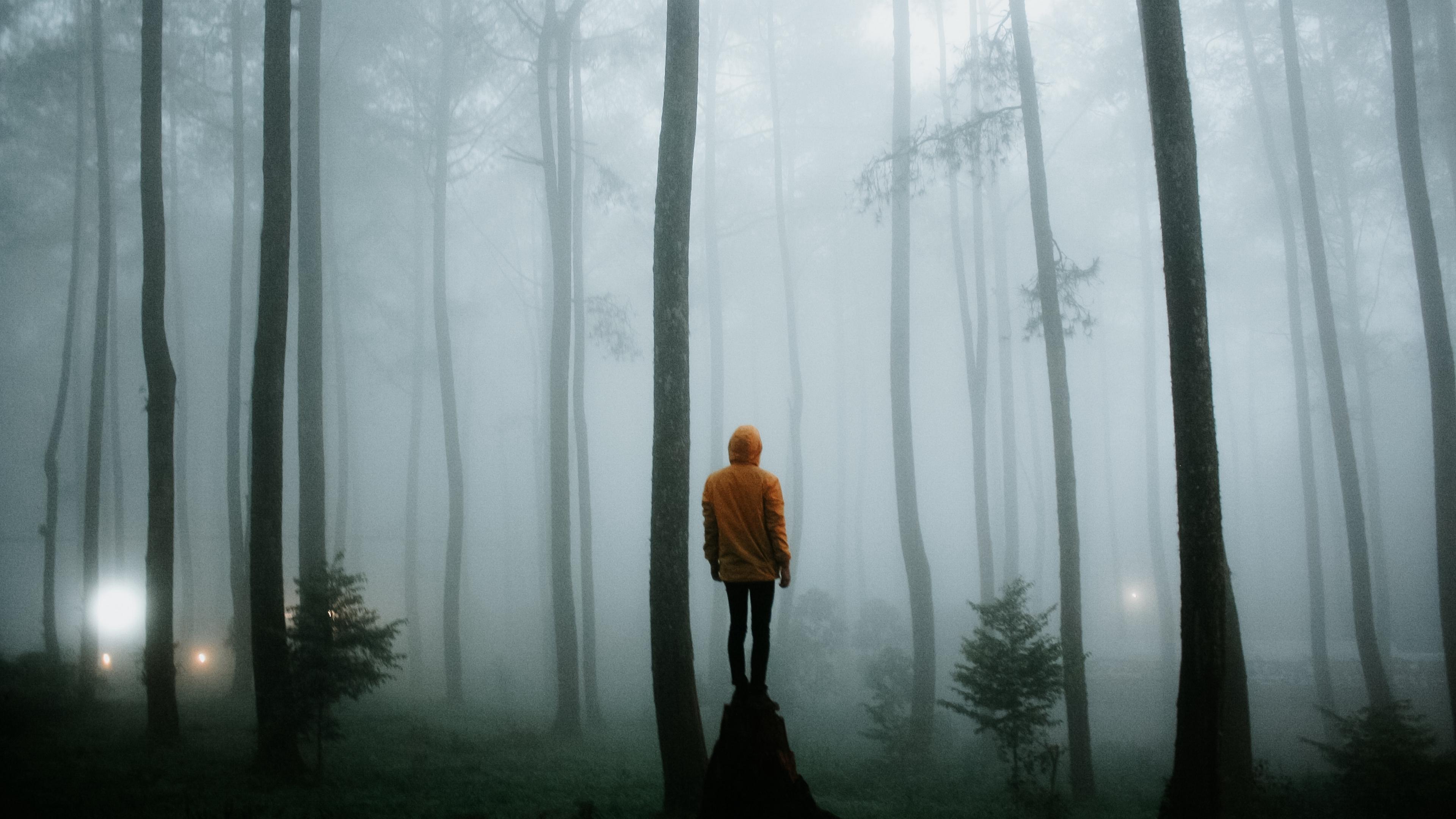 man fog loneliness forest trees 4k 1541116655 - man, fog, loneliness, forest, trees 4k - Man, loneliness, fog