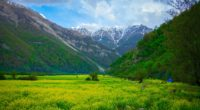 meadow mountains flowers landscape 4k 1541117897 200x110 - meadow, mountains, flowers, landscape 4k - Mountains, Meadow, Flowers