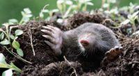 mole earth dirt grass hole 4k 1542242167 200x110 - mole, earth, dirt, grass, hole 4k - mole, Earth, Dirt