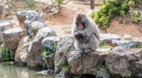 monkey japan stones 4k 1542242855 200x110 - monkey, japan, stones 4k - Stones, Monkey, Japan