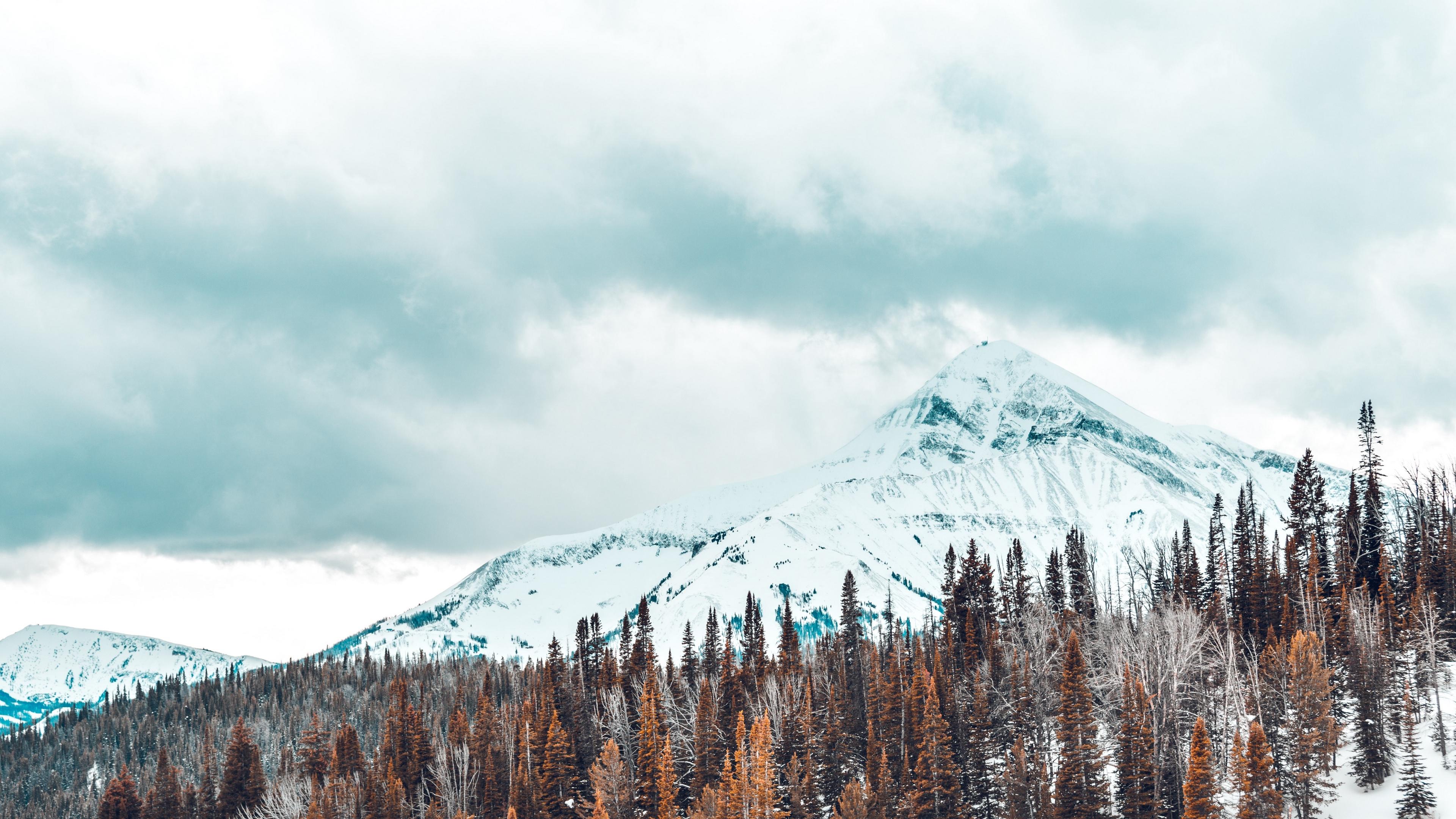 mountains snow covered trees 4k 1541115093 - mountains, snow-covered, trees 4k - Trees, snow-covered, Mountains