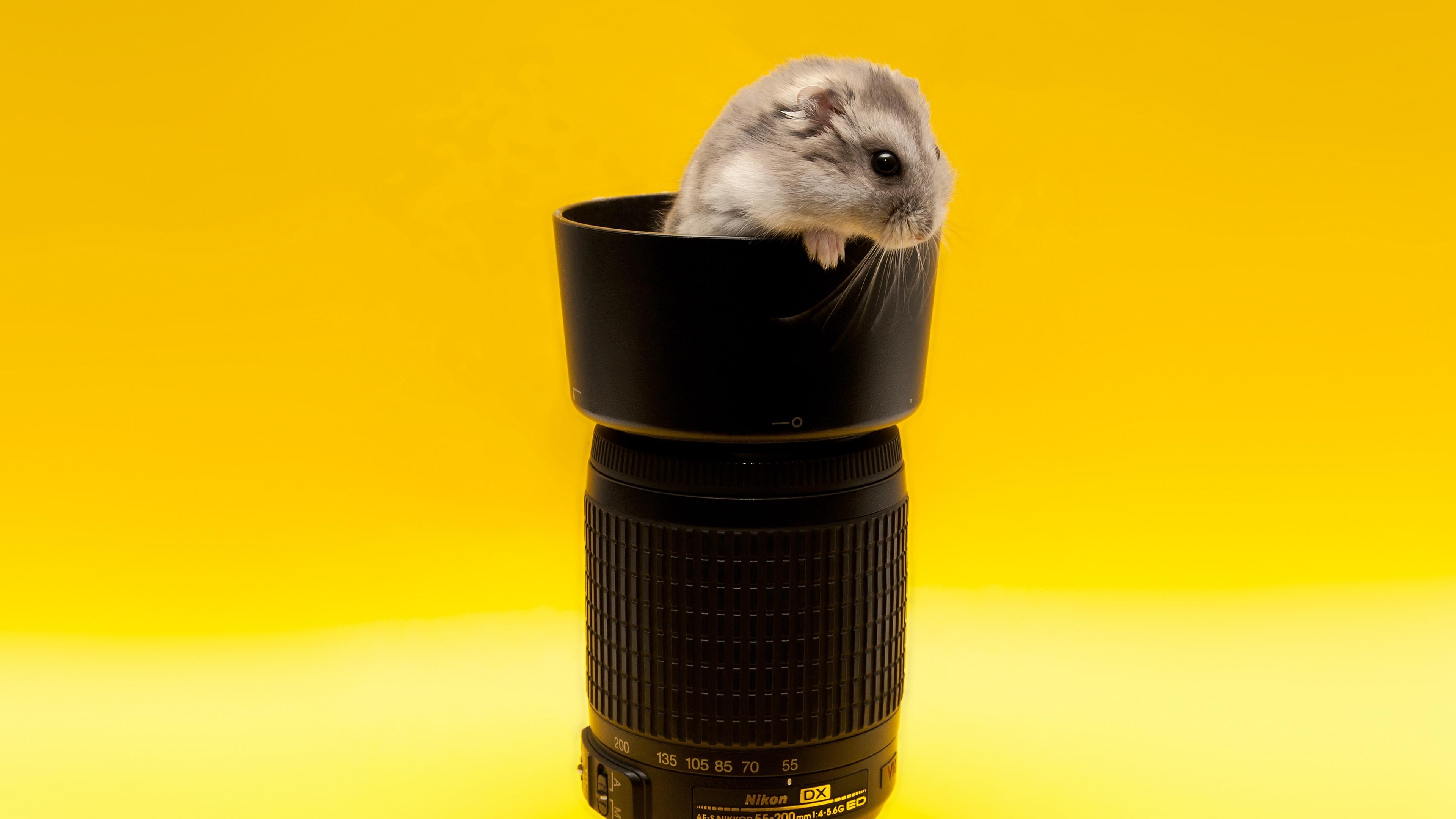 mouse lens climb rodent 4k 1542242162 - mouse, lens, climb, rodent 4k - Mouse, lens, climb