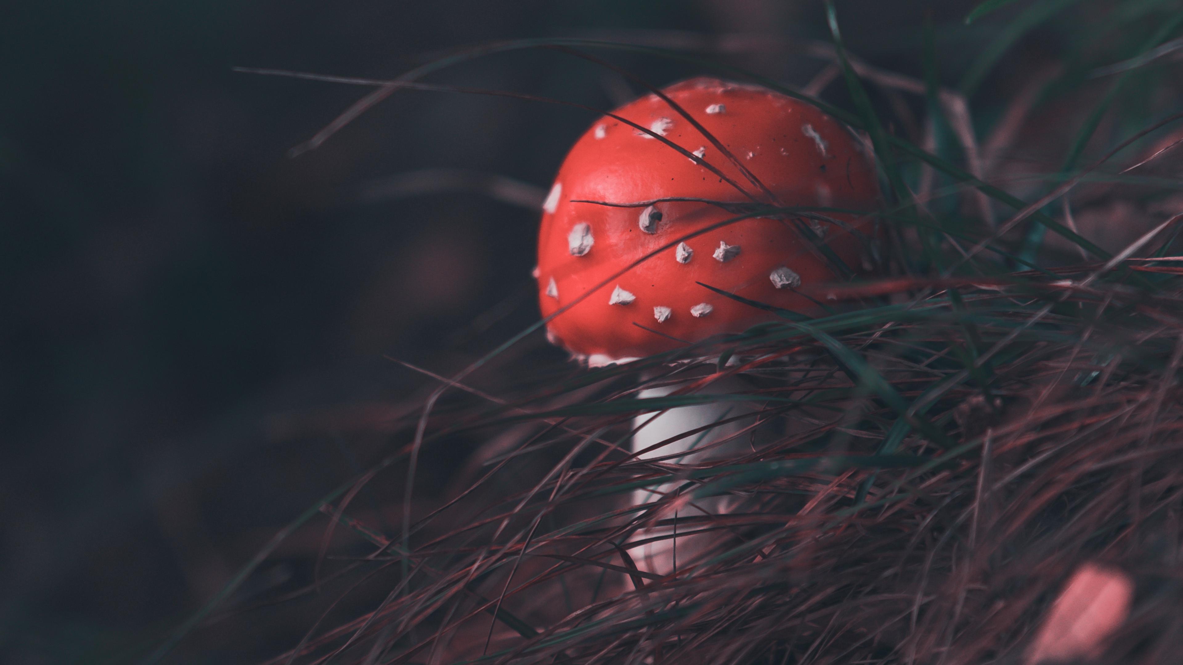 mushroom fly agaric grass blur 4k 1541113523 - mushroom, fly agaric, grass, blur 4k - Mushroom, Grass, fly agaric