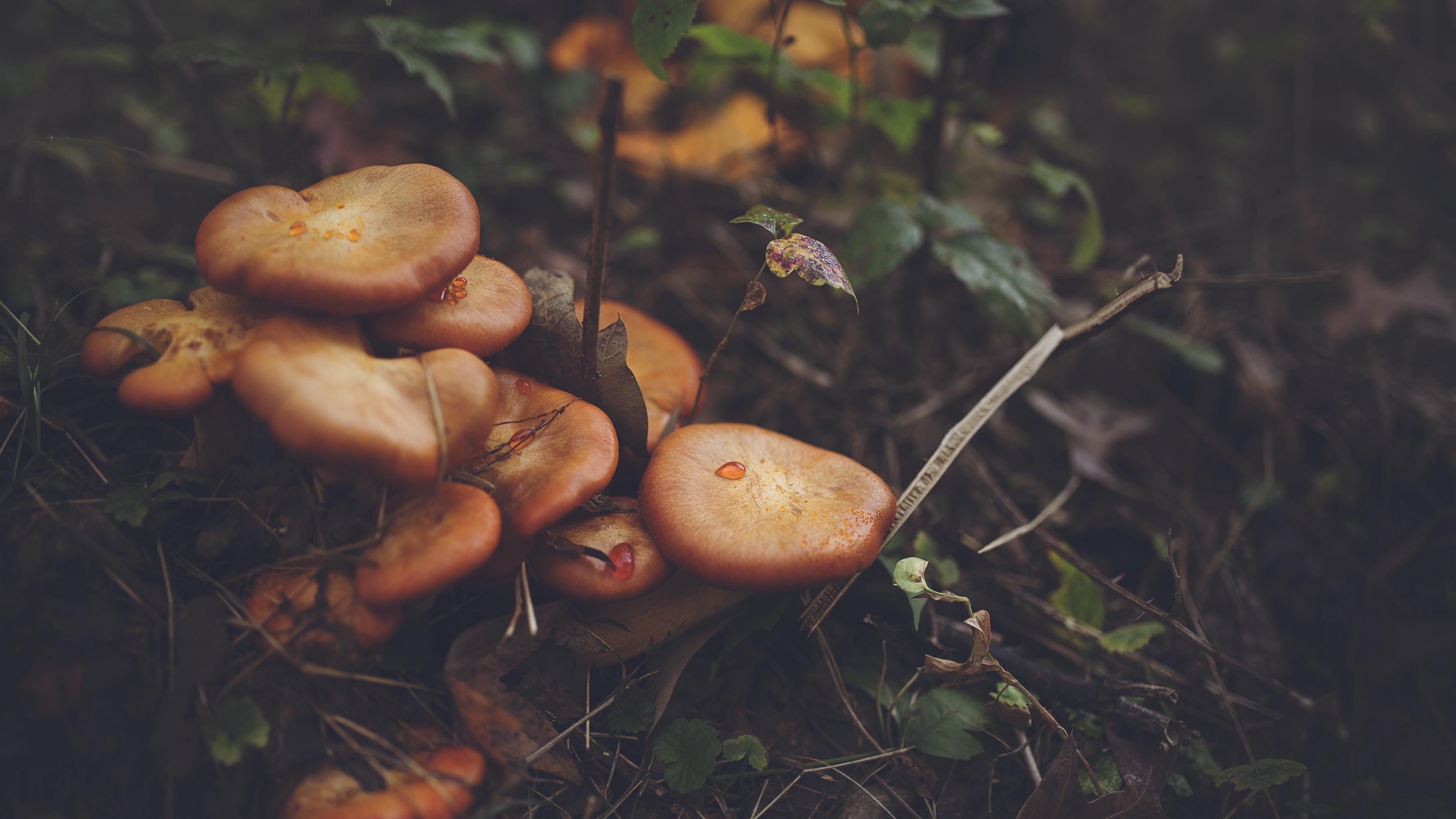 mushrooms leaves grass 4k 1541114691 - mushrooms, leaves, grass 4k - mushrooms, Leaves, Grass