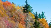 nature trees autumn 4k 1541117595 200x110 - nature, trees, autumn 4k - Trees, Nature, Autumn