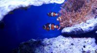 nemo fish in real underwater 4k 1542238761 200x110 - Nemo Fish In Real Underwater 4k - underwater wallpapers, sea wallpapers, ocean wallpapers, nemo wallpapers, hd-wallpapers, fish wallpapers, animals wallpapers, 4k-wallpapers