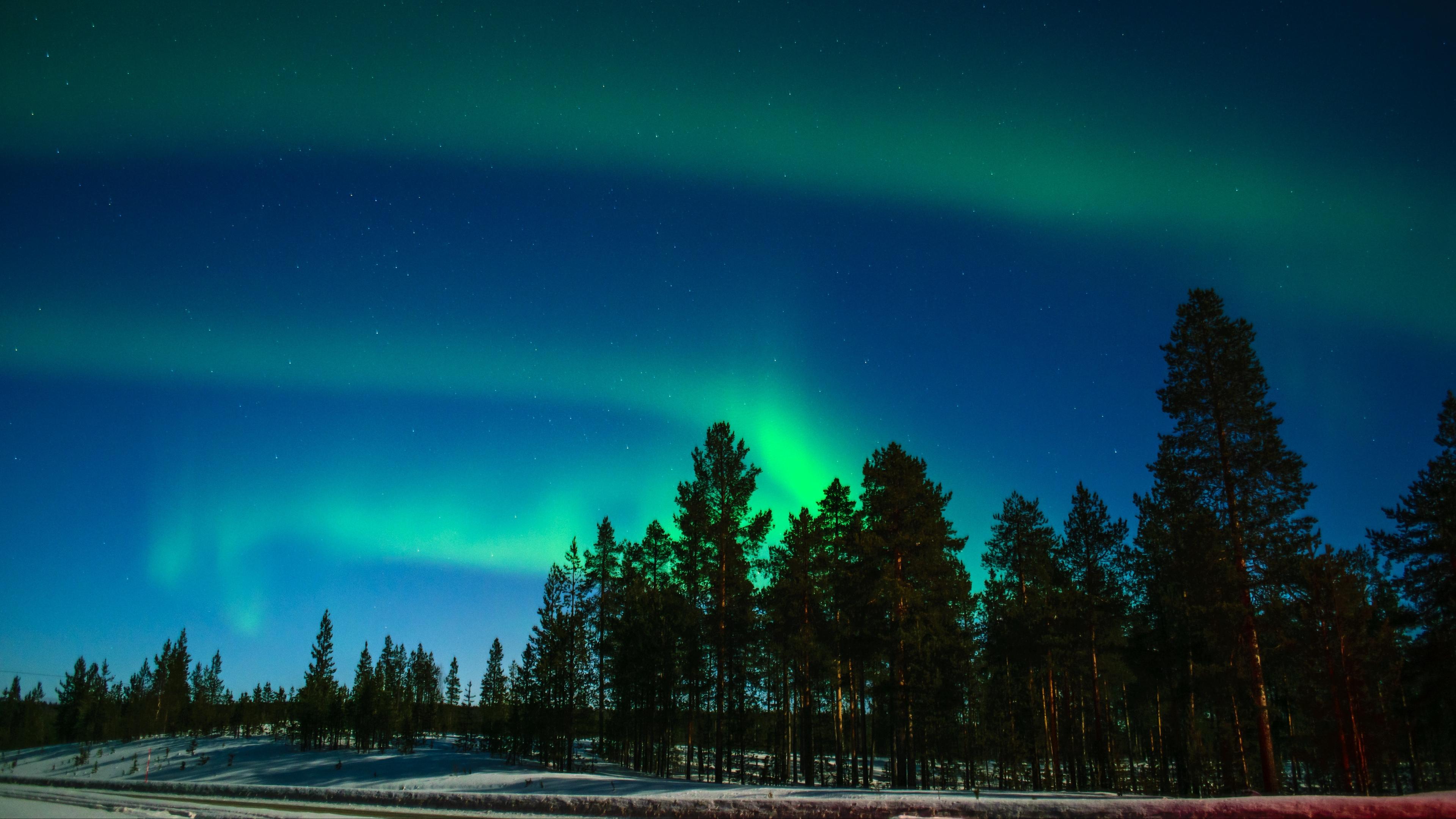 northern lights aurora trees light phenomenon lapland 4k 1541116055 - northern lights, aurora, trees, light phenomenon, lapland 4k - Trees, northern lights, Aurora