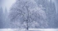 owfall winter hoarfrost 4k 1541114439 200x110 - owfall, winter, hoarfrost 4k - Winter, owfall, hoarfrost