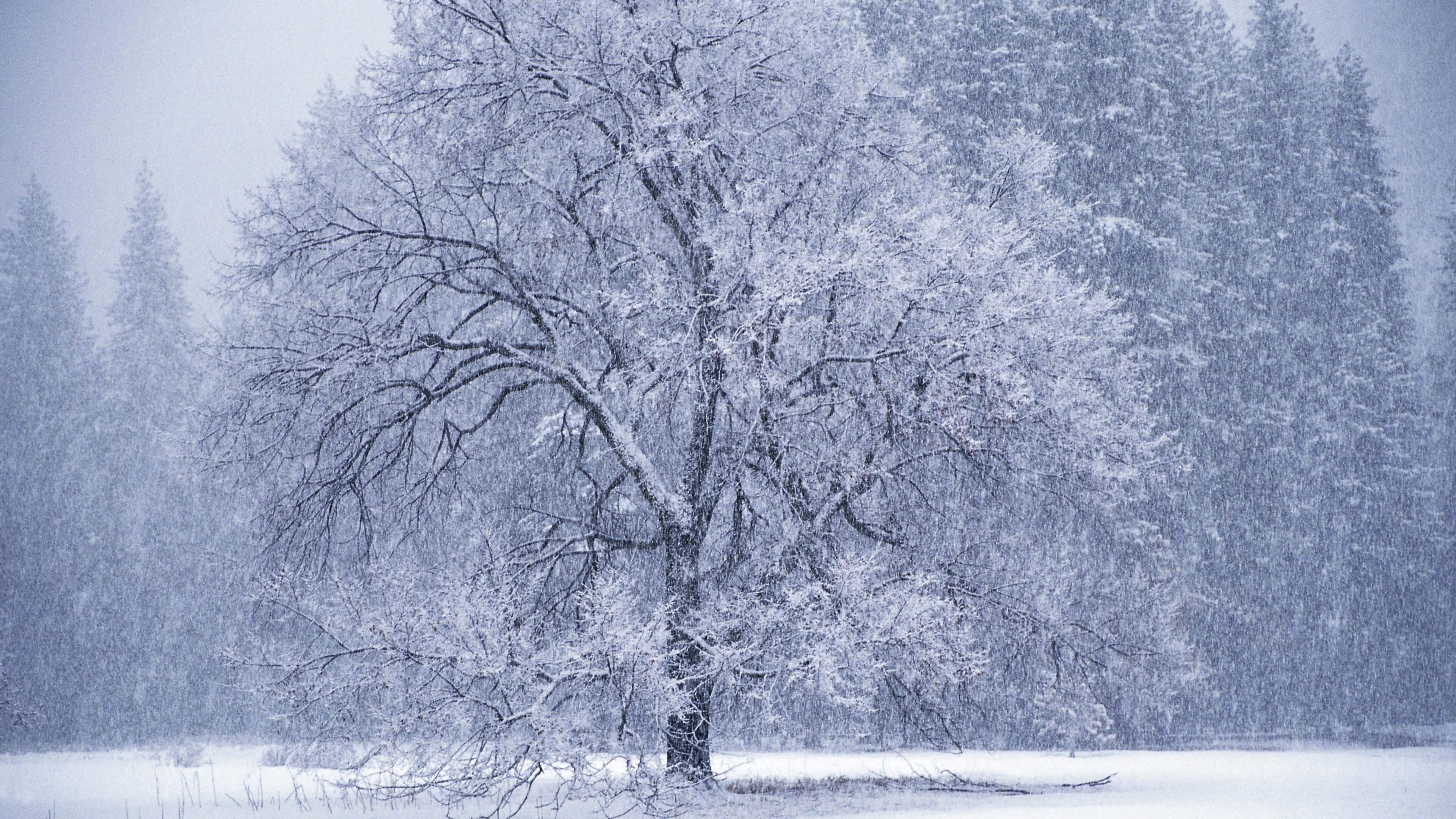 owfall winter hoarfrost 4k 1541114439 - owfall, winter, hoarfrost 4k - Winter, owfall, hoarfrost