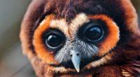 owl baby muzzle eyes feathers 4k 1542242557 200x110 - owl, baby, muzzle, eyes, feathers 4k - Owl, muzzle, Baby