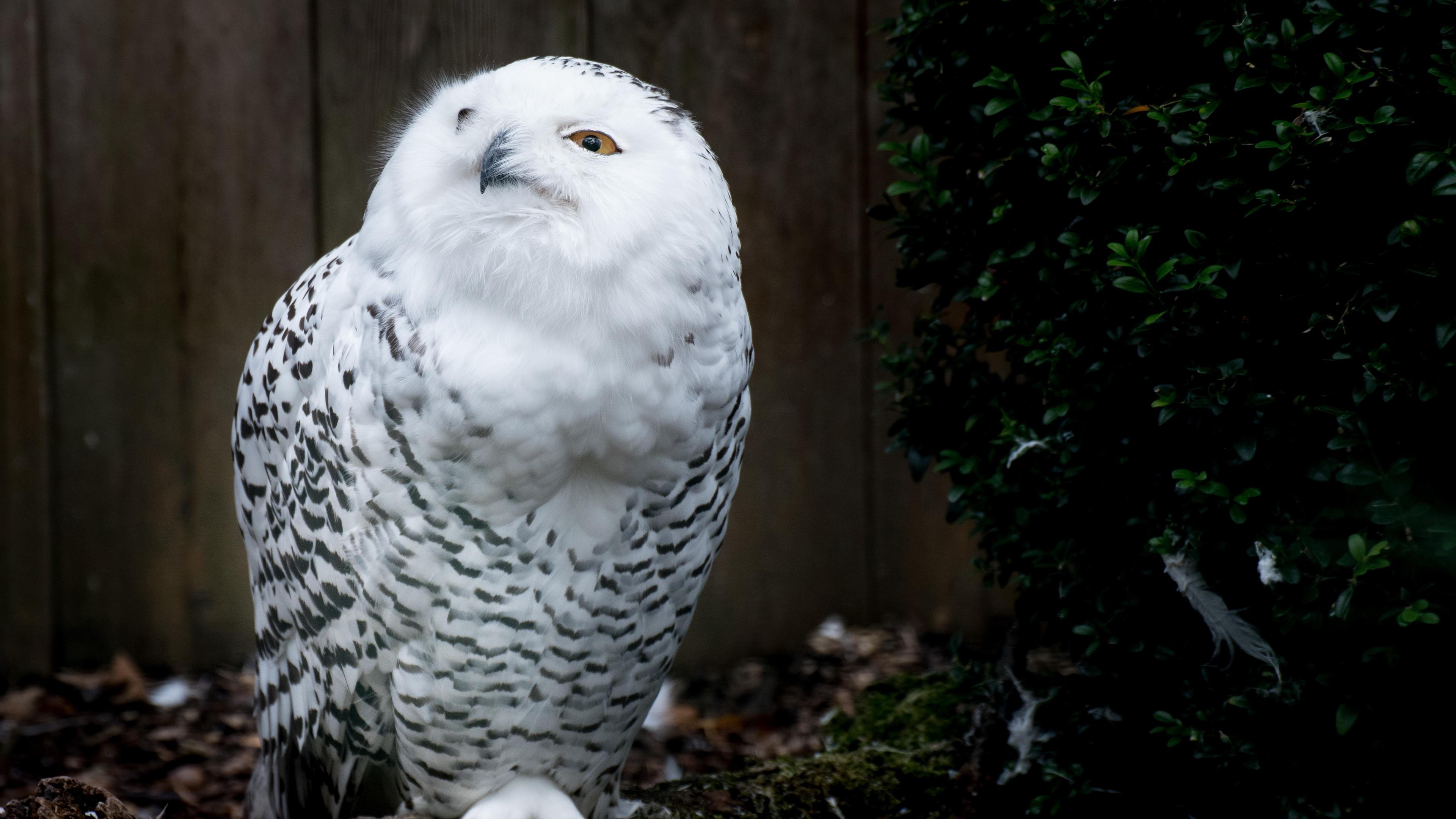 owl bird predator 4k 1542241881 - owl, bird, predator 4k - Predator, Owl, Bird