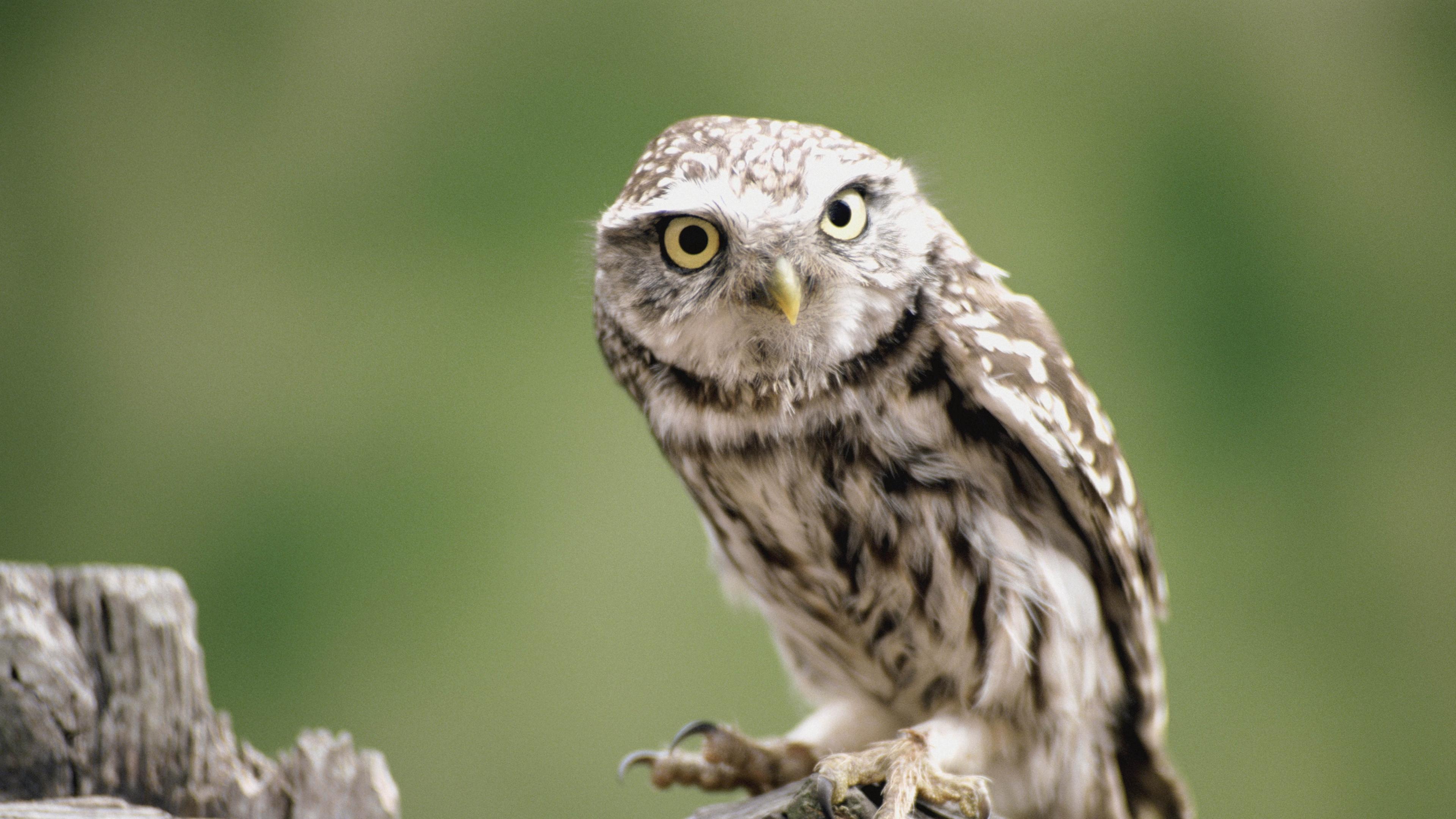 owl branch bird predator 4k 1542241594 - owl, branch, bird, predator 4k - Owl, branch, Bird