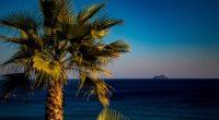 palm tree sea tropics 4k 1541116880 200x110 - palm tree, sea, tropics 4k - tropics, Sea, palm tree