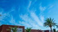 palm tree sky summer 4k 1541116446 200x110 - palm tree, sky, summer 4k - Summer, Sky, palm tree