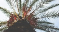 palm tree view from below tropical branches trunk 4k 1541115877 200x110 - palm tree, view from below, tropical, branches, trunk 4k - view from below, Tropical, palm tree