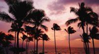 palm trees sunset sea 4k 1541117800 200x110 - palm trees, sunset, sea 4k - sunset, Sea, palm trees