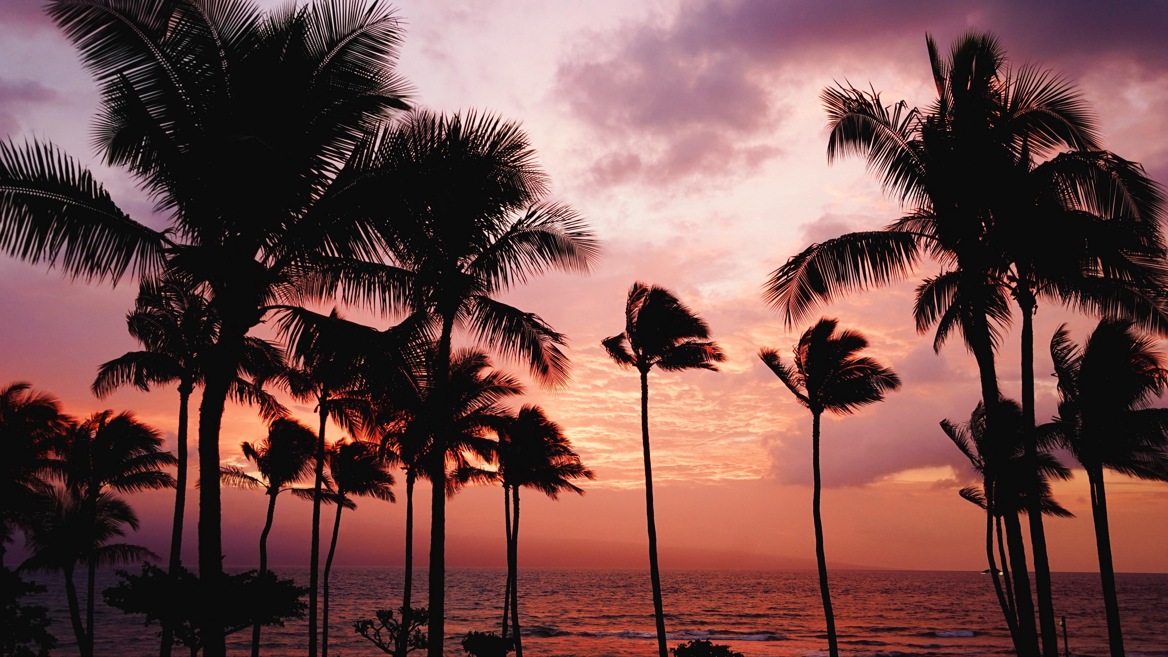 palm trees sunset sea 4k 1541117800 - palm trees, sunset, sea 4k - sunset, Sea, palm trees