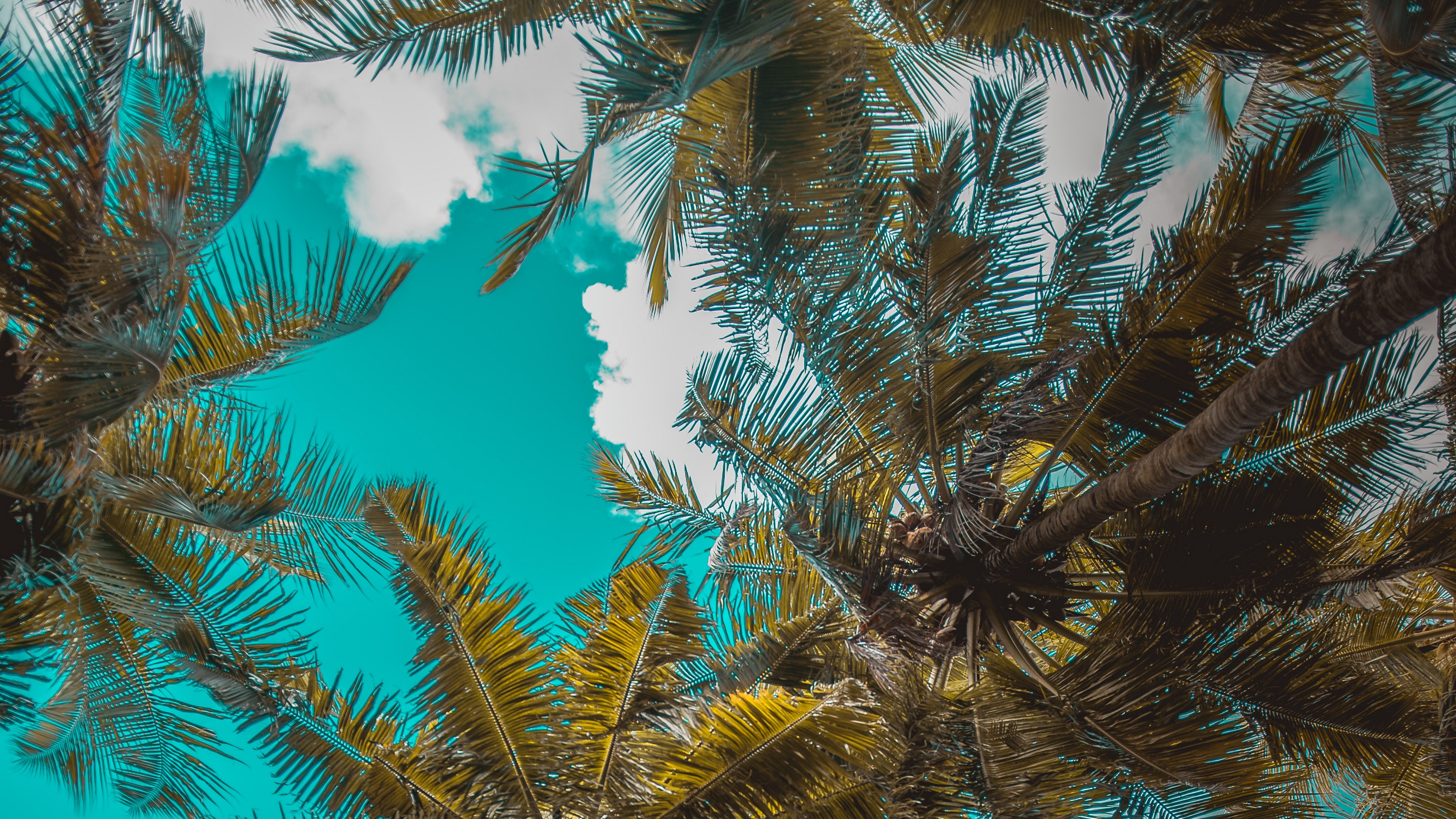 palm trees trees branches tropics sky clouds 4k 1541113730 - palm trees, trees, branches, tropics, sky, clouds 4k - Trees, palm trees, branches