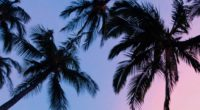 palms sunset bottom view branches sky 4k 1541113535 200x110 - palms, sunset, bottom view, branches, sky 4k - sunset, palms, bottom view
