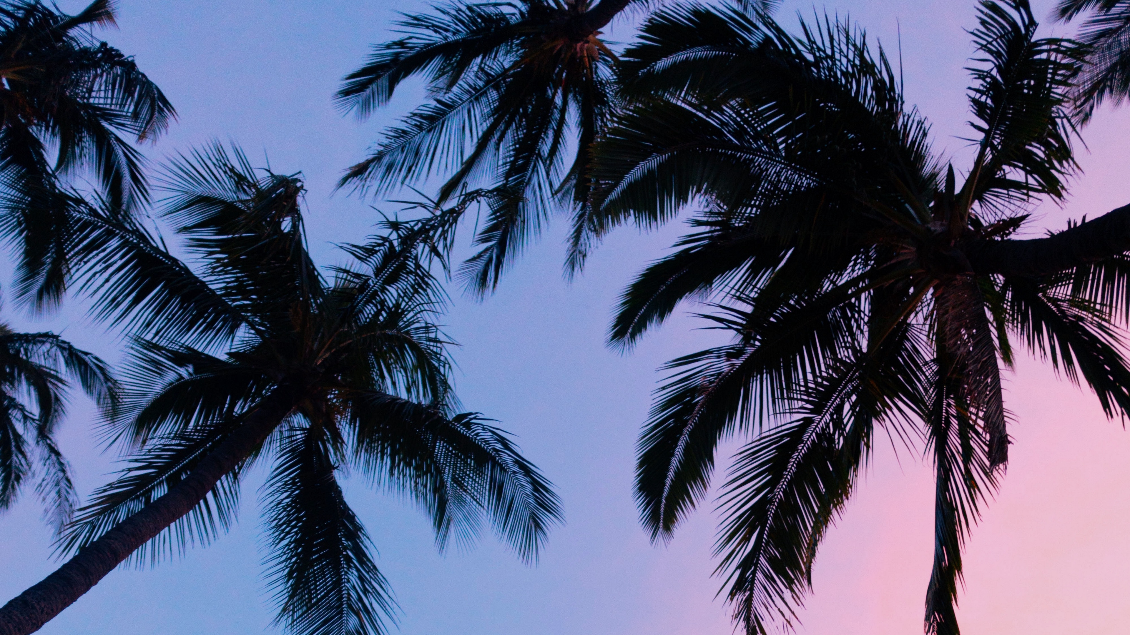 palms sunset bottom view branches sky 4k 1541113535 - palms, sunset, bottom view, branches, sky 4k - sunset, palms, bottom view
