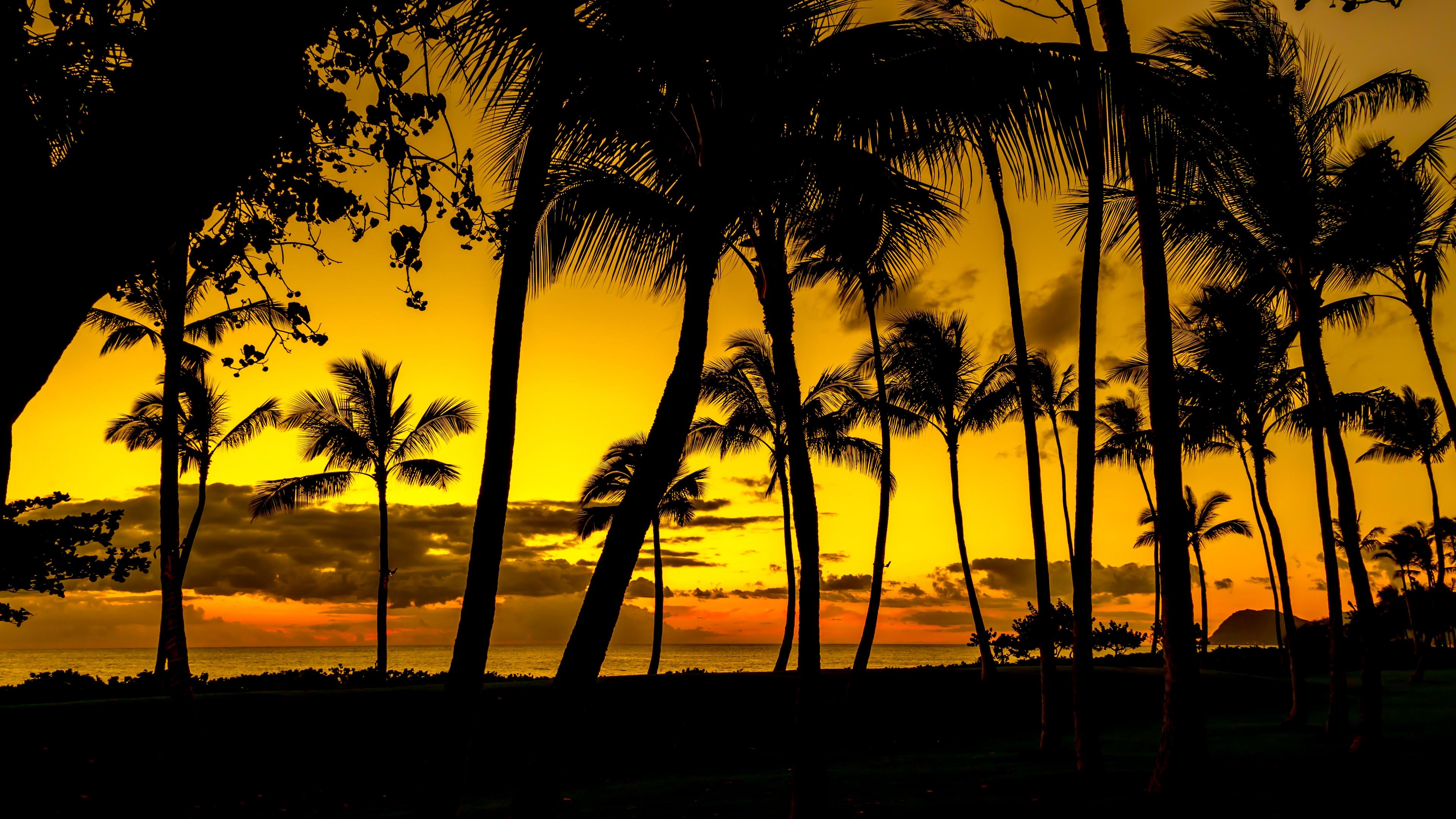 palms sunset tropics shore dark 4k 1541113697 - palms, sunset, tropics, shore, dark 4k - tropics, sunset, palms