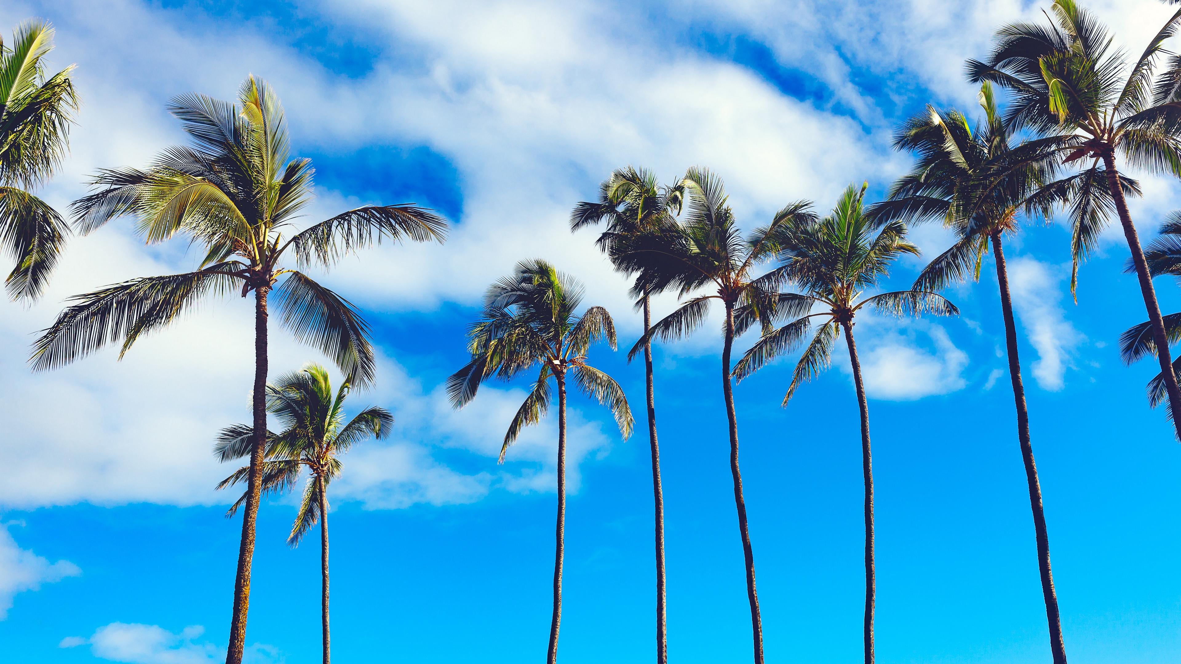 palms trees summer sky 4k 1541117794 - palms, trees, summer, sky 4k - Trees, Summer, palms