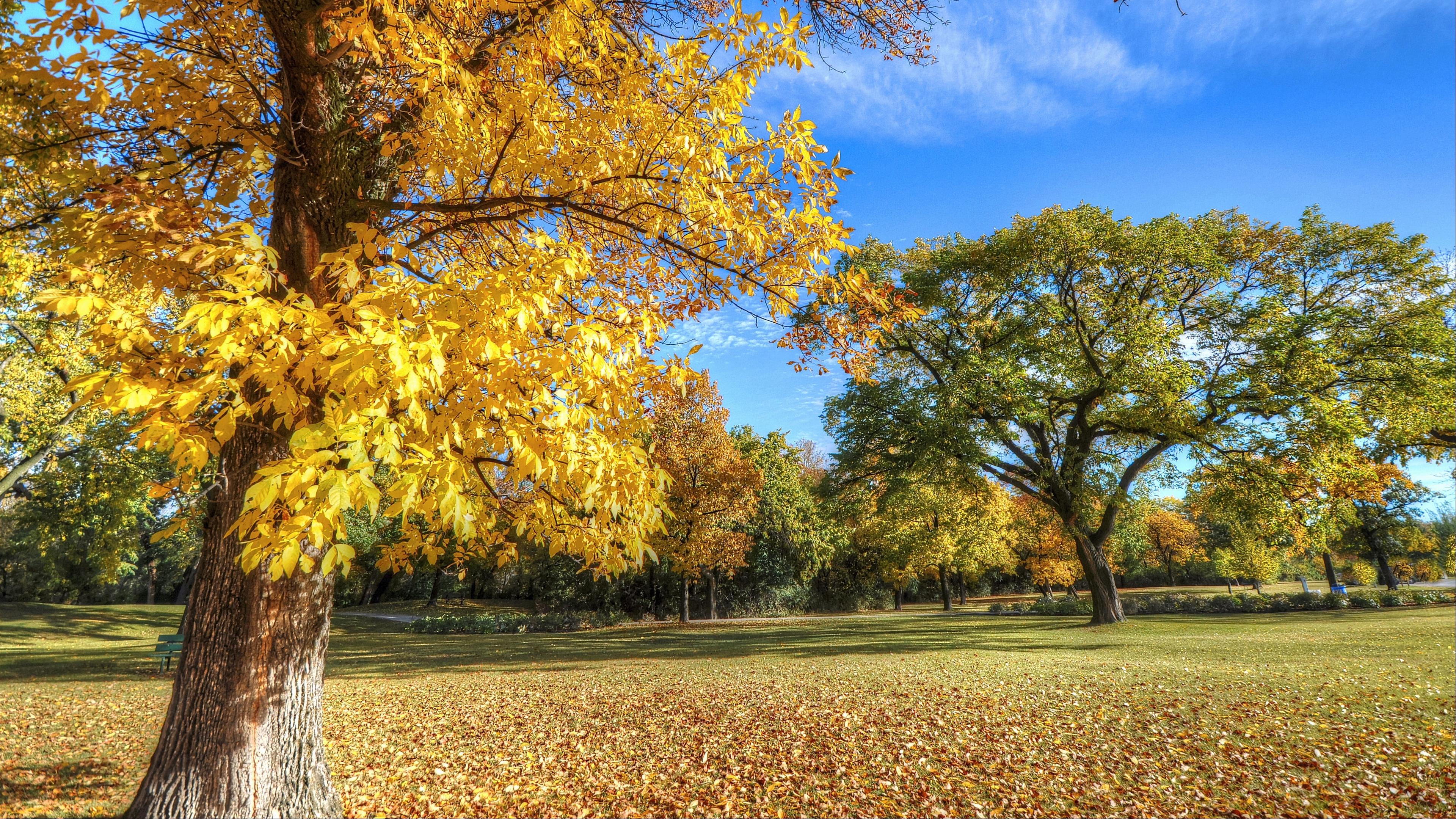 park autumn trees foliage 4k 1541114006 - park, autumn, trees, foliage 4k - Trees, Park, Autumn