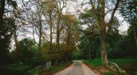 park path autumn trees paris 4k 1541117180 200x110 - park, path, autumn, trees, paris 4k - path, Park, Autumn