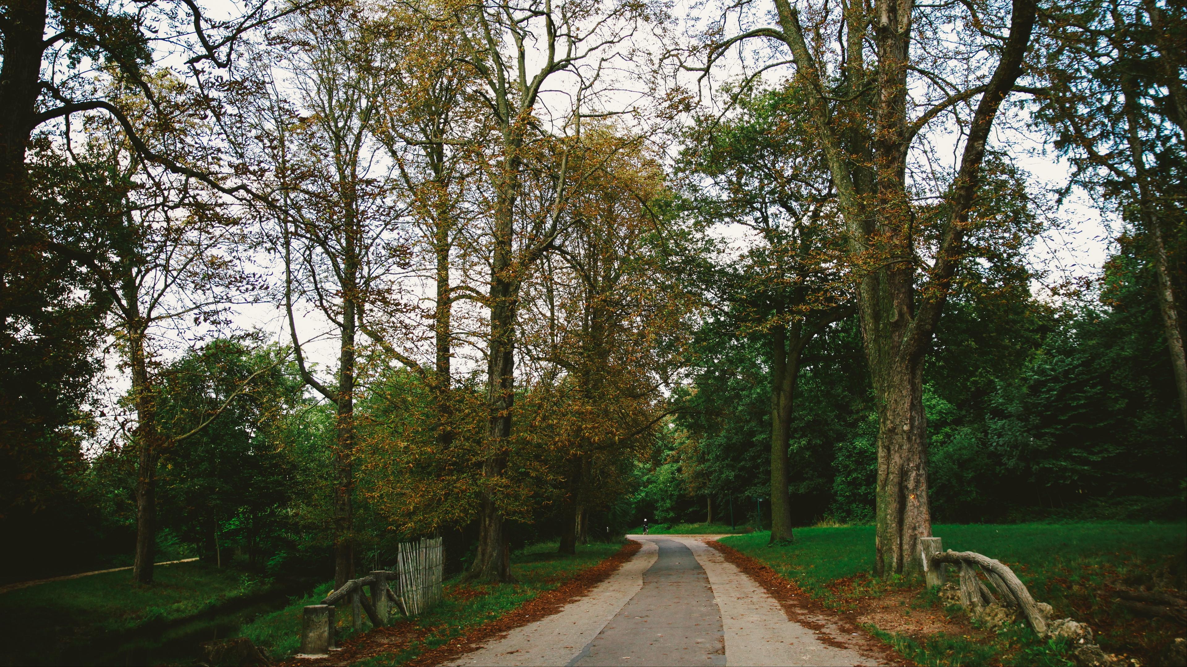 park path autumn trees paris 4k 1541117180 - park, path, autumn, trees, paris 4k - path, Park, Autumn