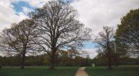 park path trees garden 4k 1541113463 200x110 - park, path, trees, garden 4k - Trees, path, Park