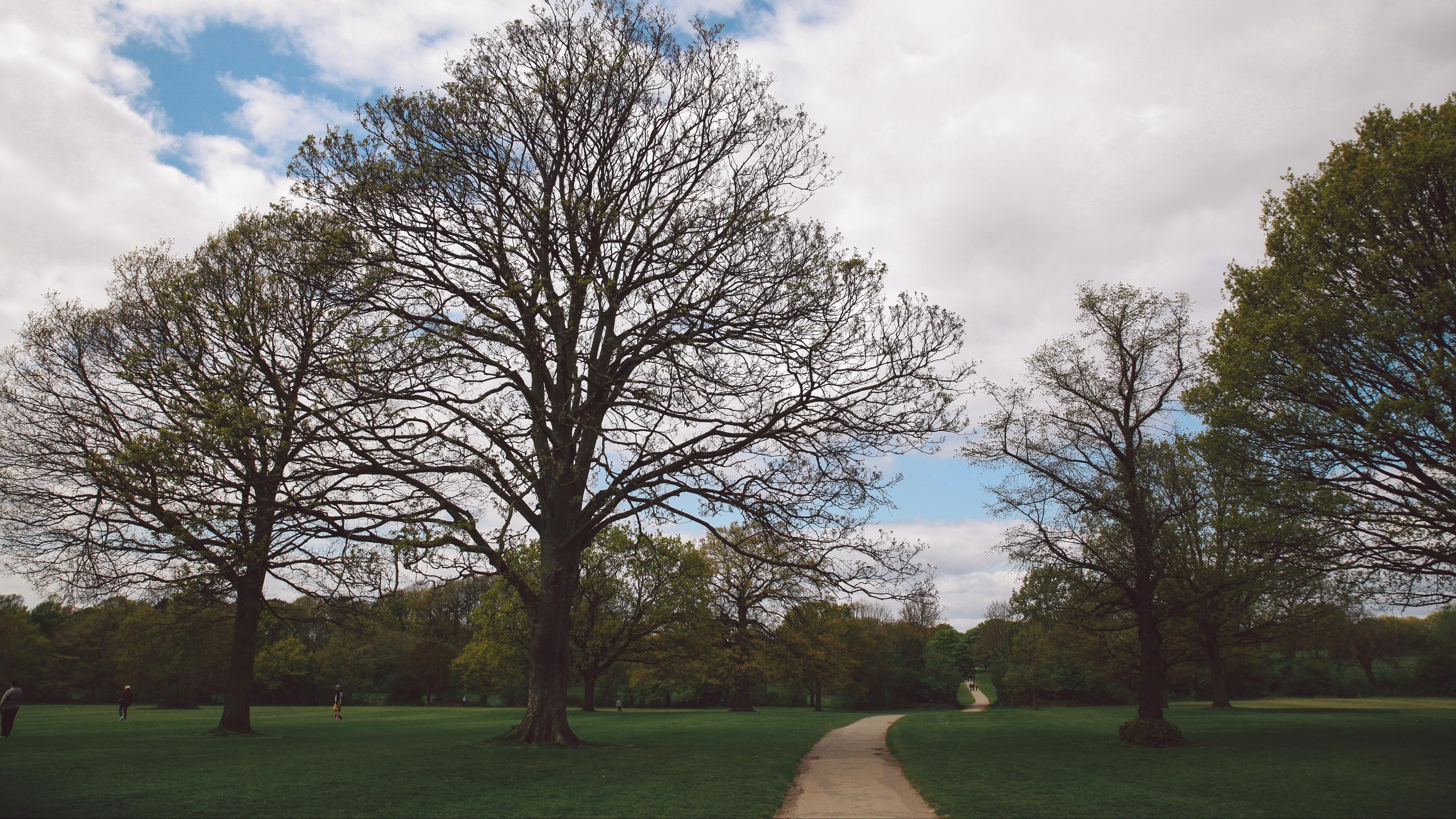 park path trees garden 4k 1541113463 - park, path, trees, garden 4k - Trees, path, Park