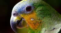 parrot colorful 4k 1542238400 200x110 - Parrot Colorful 4k - photography wallpapers, parrot wallpapers, macro wallpapers, hd-wallpapers, birds wallpapers, animals wallpapers, 4k-wallpapers