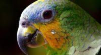 parrot colorful 4k 1542238400 200x110 - Parrot Colorful 4k - photography wallpapers, parrot wallpapers, macro wallpapers, hd-wallpapers, birds wallpapers, animals wallpapers, 4k-wallpapers