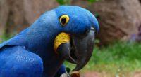 parrot macaw bird beak 4k 1542242244 200x110 - parrot, macaw, bird, beak 4k - Parrot, Macaw, Bird