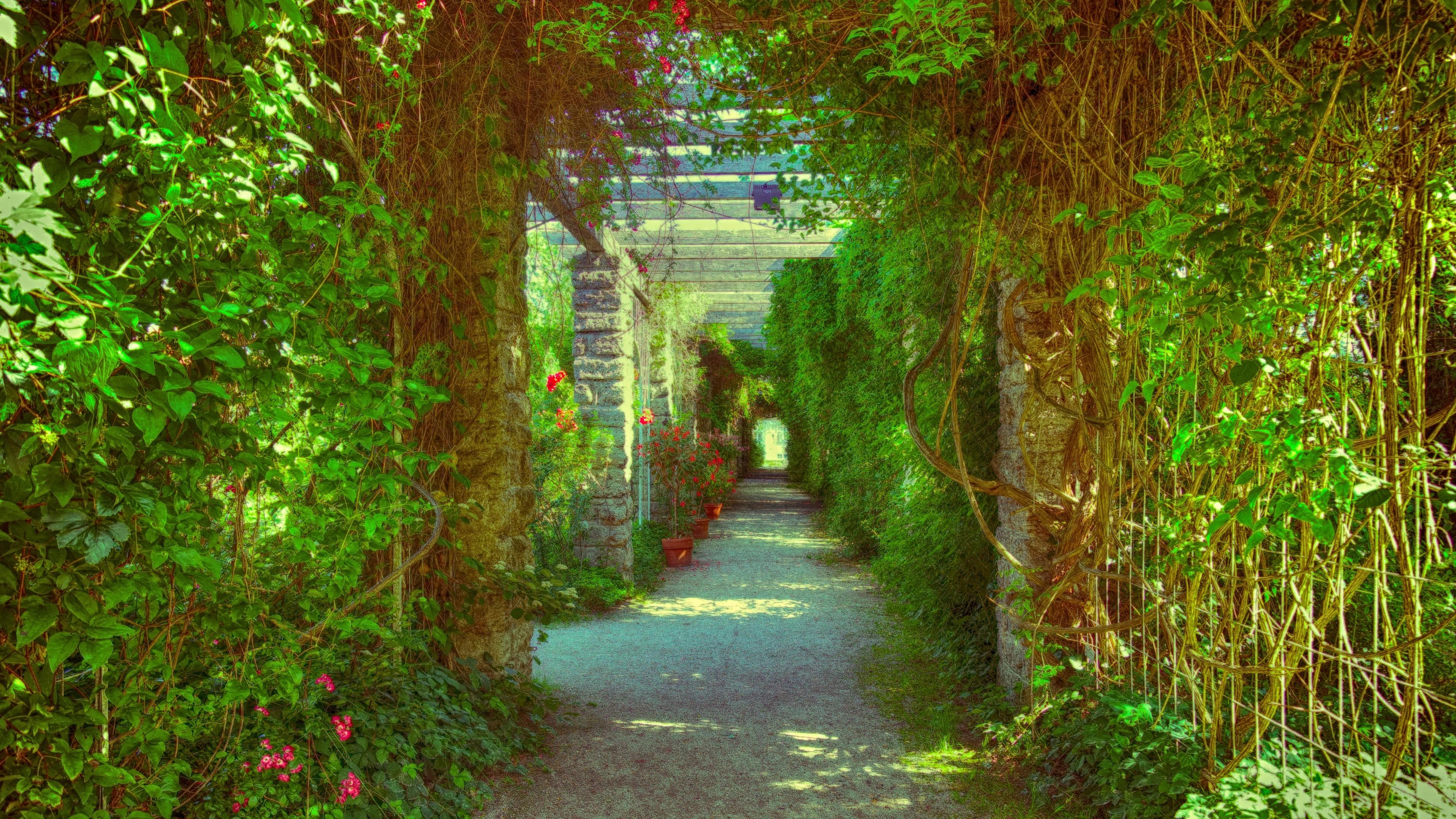 passage overgrown flowers plant 4k 1541116067 - passage, overgrown, flowers, plant 4k - passage, overgrown, Flowers
