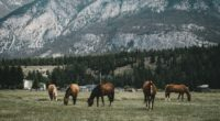pasture horses mountains 4k 1542242355 200x110 - pasture, horses, mountains 4k - pasture, Mountains, Horses