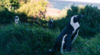 penguin grass sky blur 4k 1542241512 200x110 - penguin, grass, sky, blur 4k - Sky, Penguin, Grass